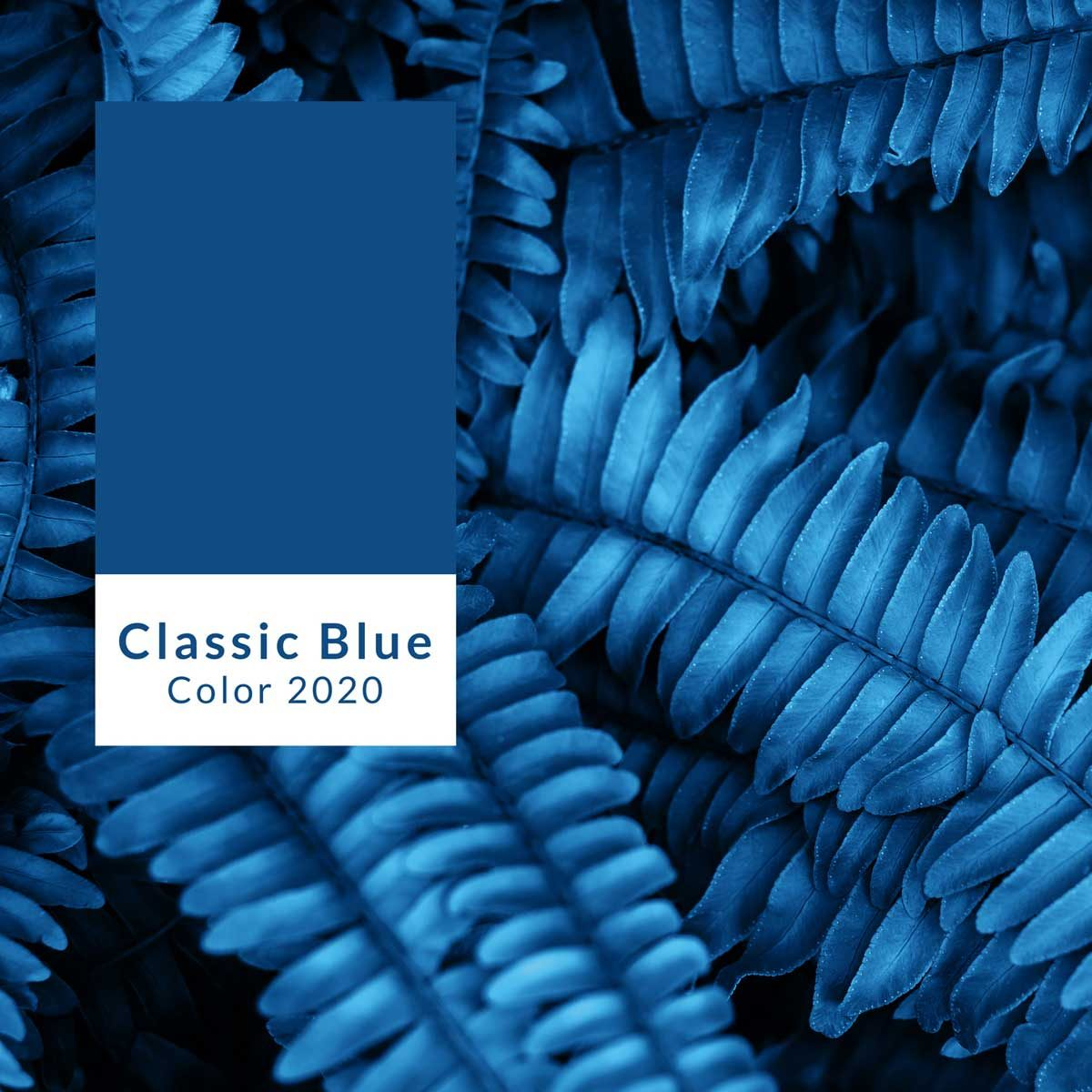 Photo of Pantone's 2020 color of the year