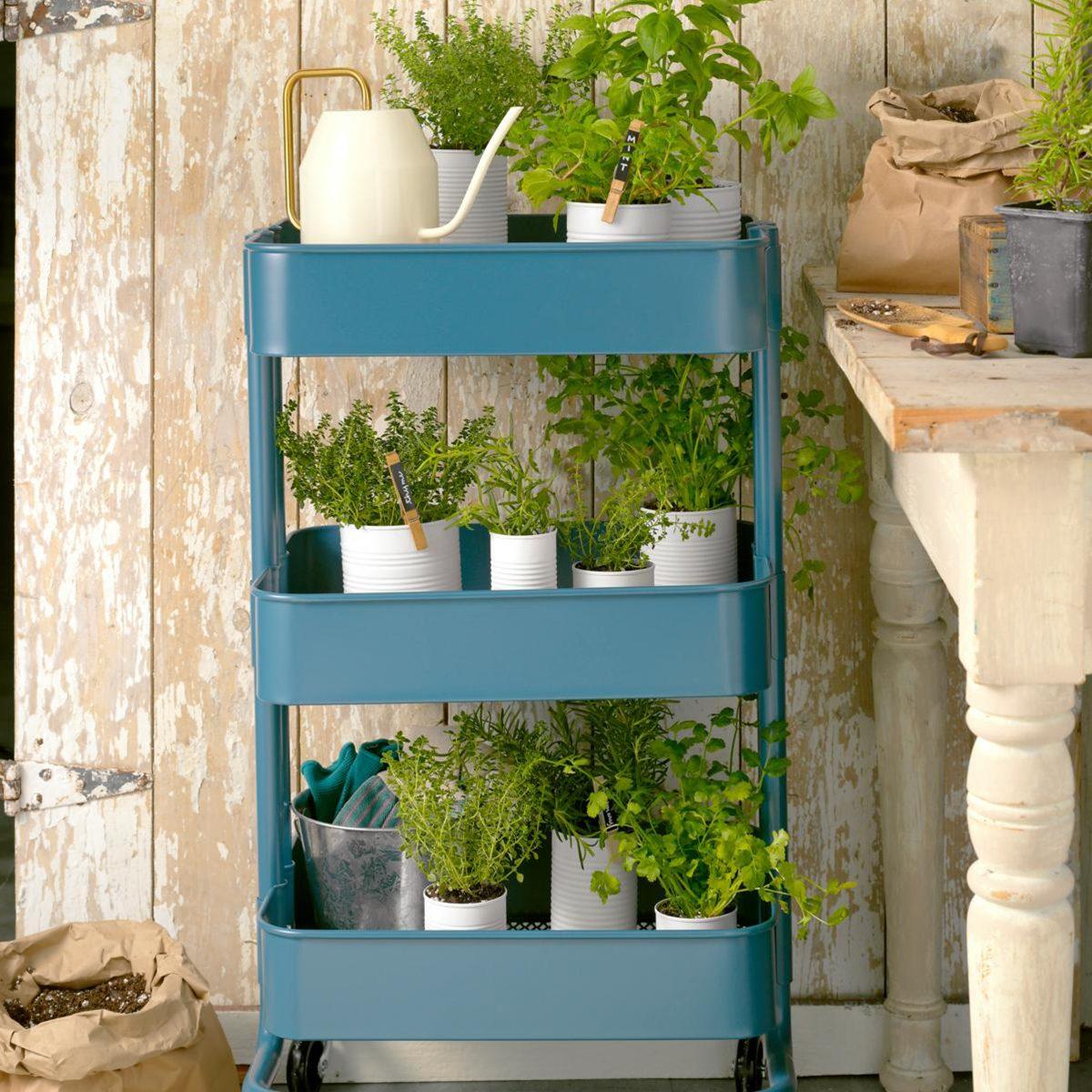 herbs on blue wheel shelf in shed