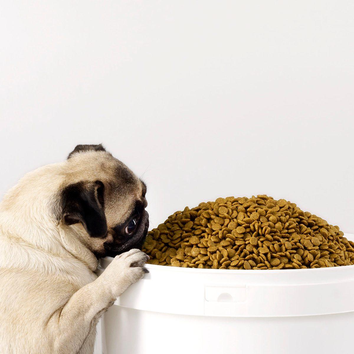 Dog eating a bucket of dog food