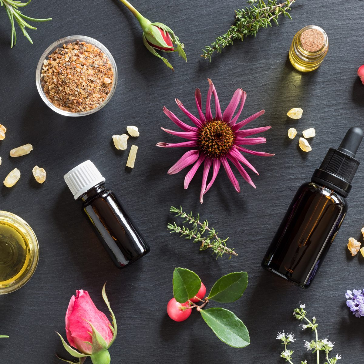 Bottles of essential oil with rosemary, thyme, creeping thyme, echinacea, wintergreen, lavender, myrrh, frankincense and rose buds on a dark background