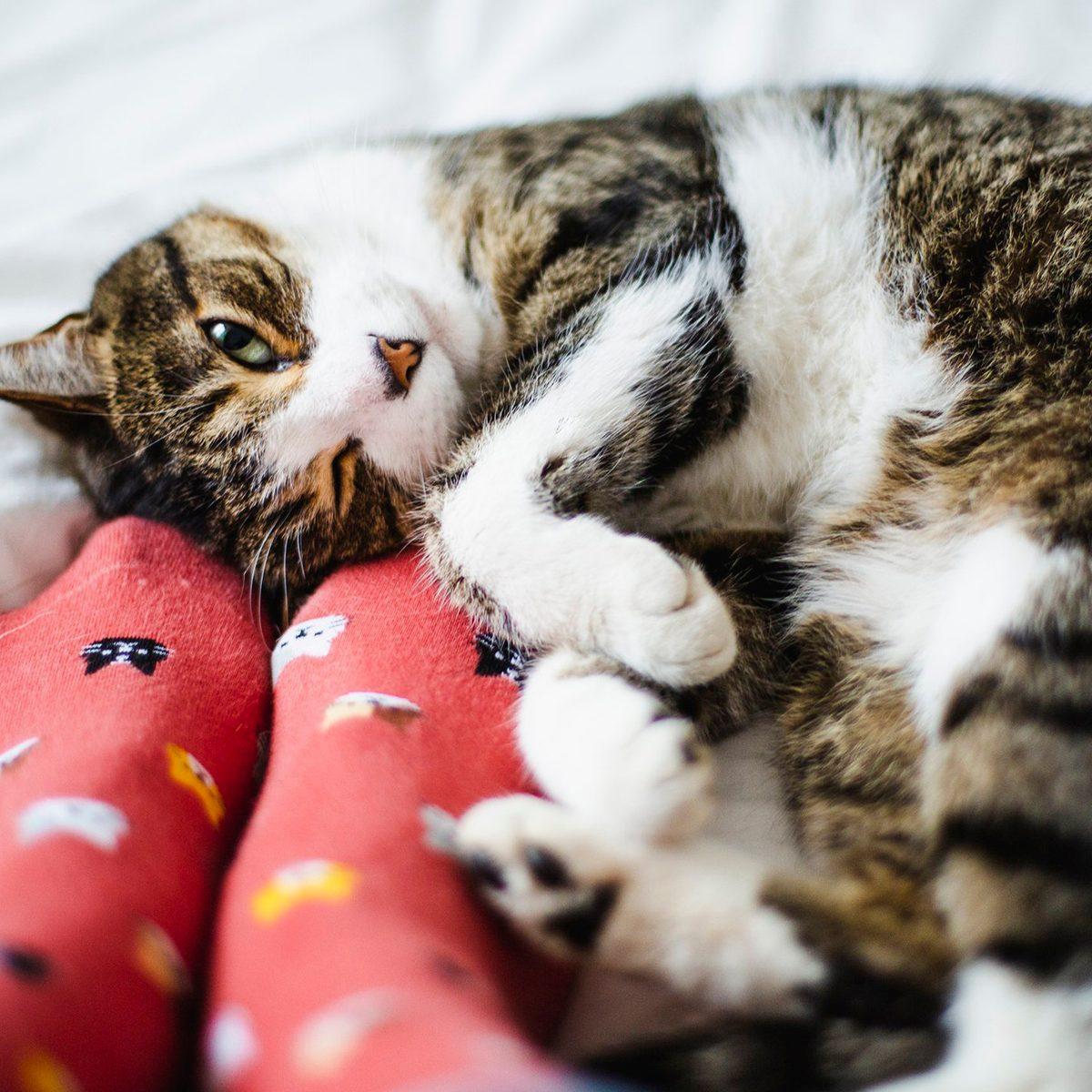 Cat cuddling by colorful socks