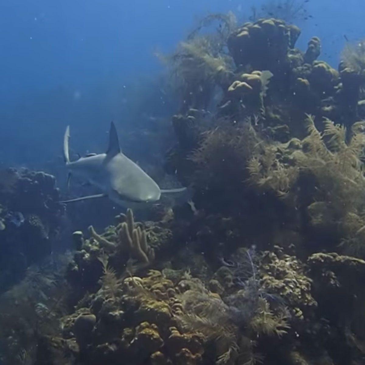 Belize's beautiful Barrier Reef