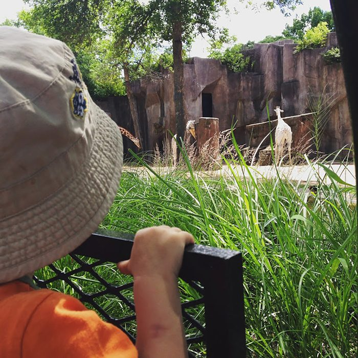 kid at the zoo
