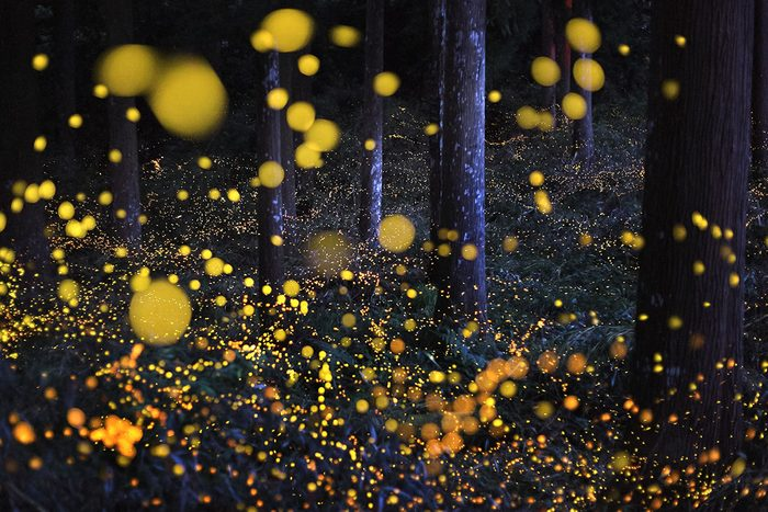 Fireflies in woods at night