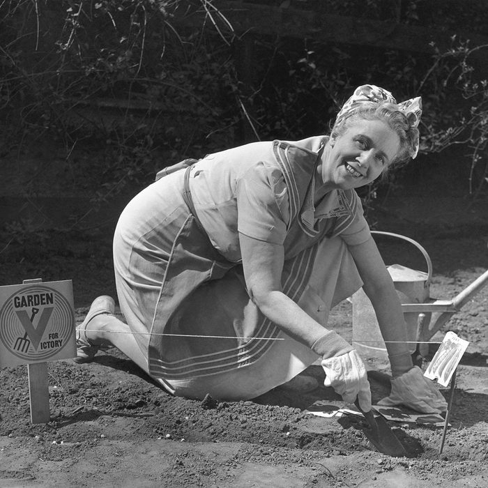 UNITED STATES - CIRCA 1950s: Mature woman working in vegetable garden.