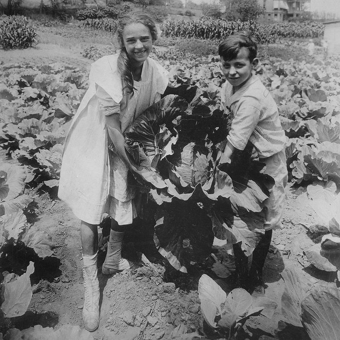 School children hold one of the large heads of cabbage raised in the War garden of Public School 88, Borough of Queens, New York City. The garden covers a tract of one acre and yielded over $500 worth of produce. (Photo by War Department/Buyenlarge/Getty Images)