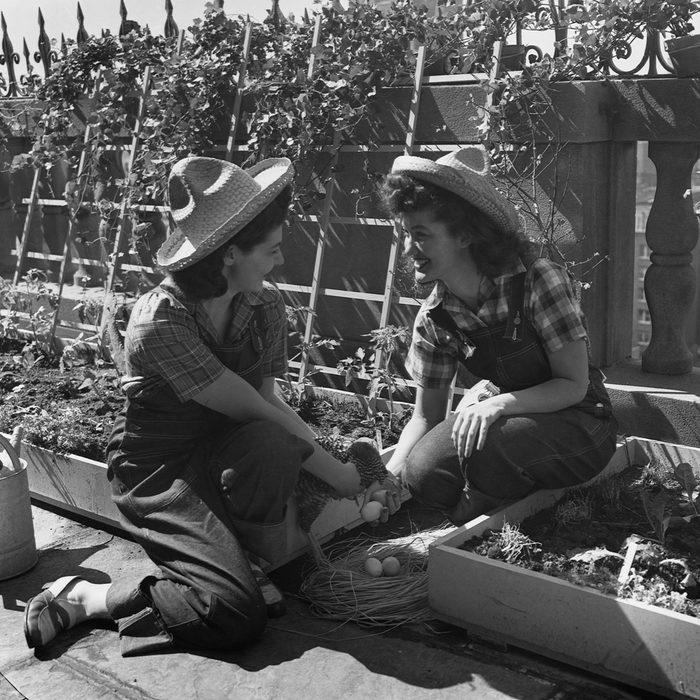Two women from Mount Holyoke College in Massachusetts tend a World War II Victory garden.