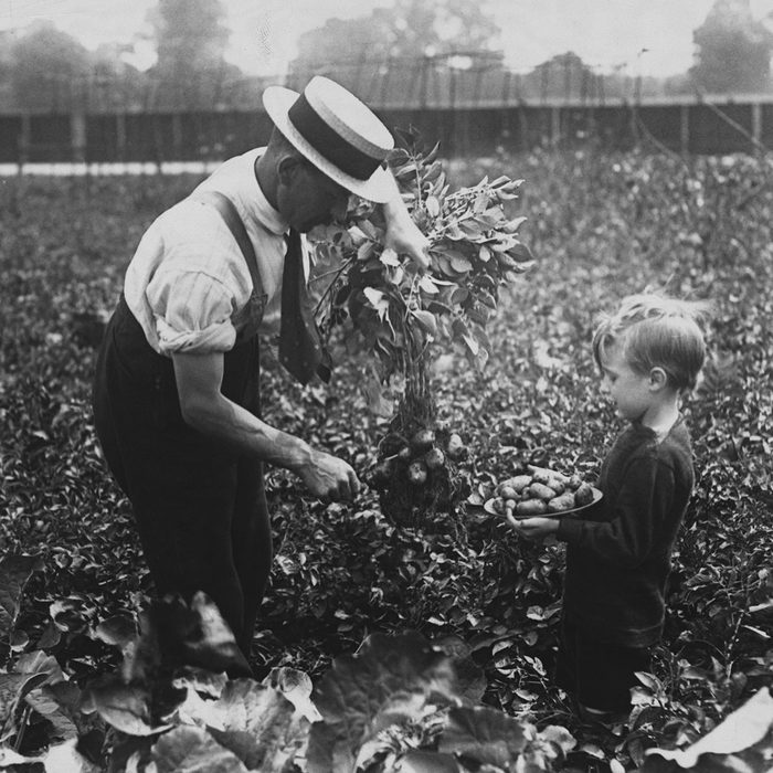 """(Original Caption) """"Dig For Victory"""" - Allotments At Dulwich. (Photo by © Hulton-Deutsch Collection/CORBIS/Corbis via Getty Images)"""