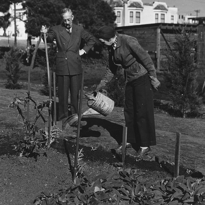 A husband and wife water and tend to crops inside the Victory Garden, a plot of land for harvesting crops to supplement American efforts during World War II, Washington, District of Columbia, 1943. Image courtesy National Archives. (Photo via Smith Collection/Gado/Getty Images).