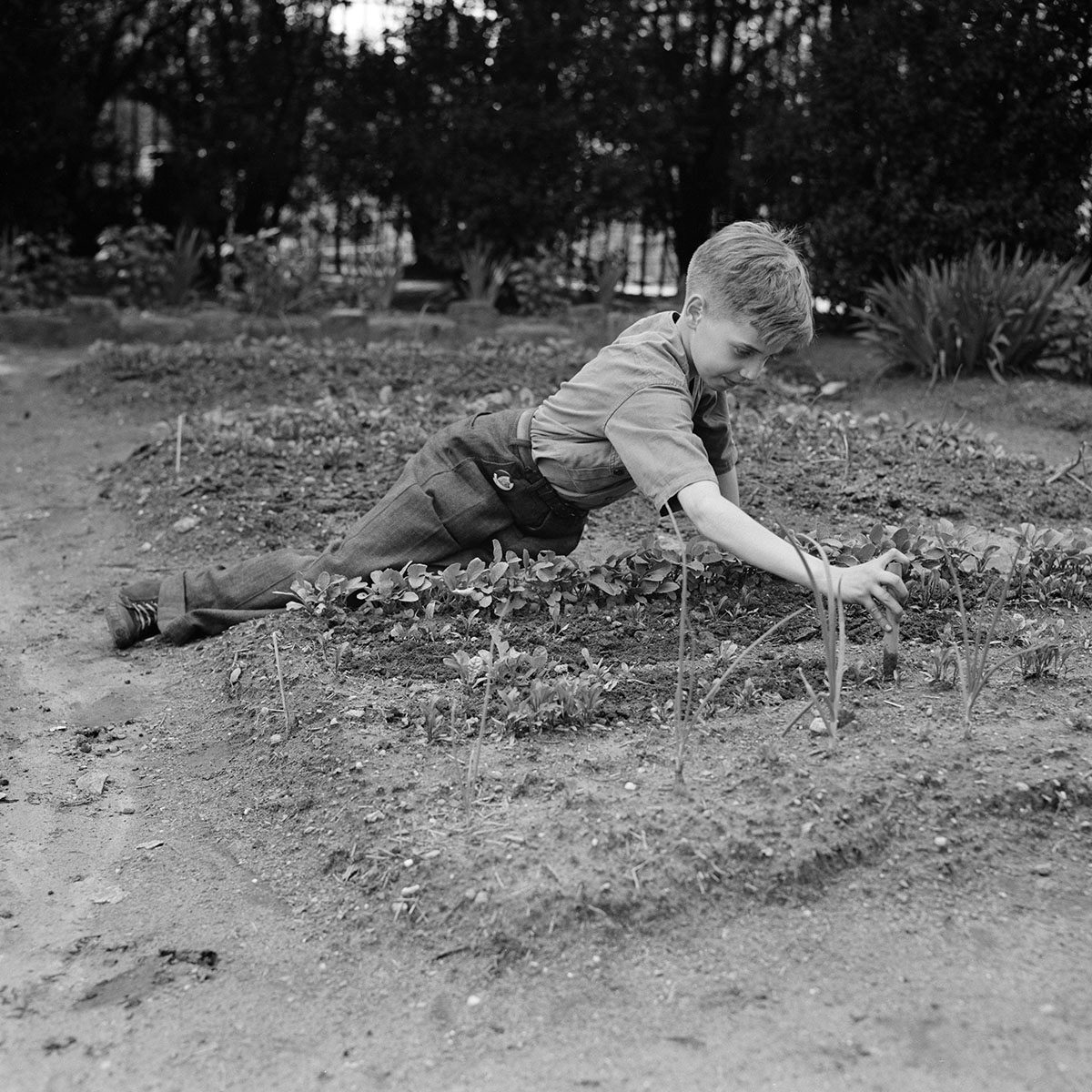 Child Working in School Victory Garden, First Avenue between Thirty-Fifth and Thirty-Sixth Streets, New York City, New York, USA, Edward Meyer for Office of War Information, June 1944. (Photo by: Universal History Archive/Universal Images Group via Getty Images)