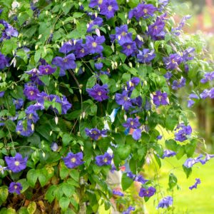 13 Perennial Vines Your Garden Can't Go Without