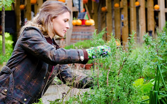 Woman in a garden, taking care of plants, pruning. Woman in a garden, taking care of plants, pruning.