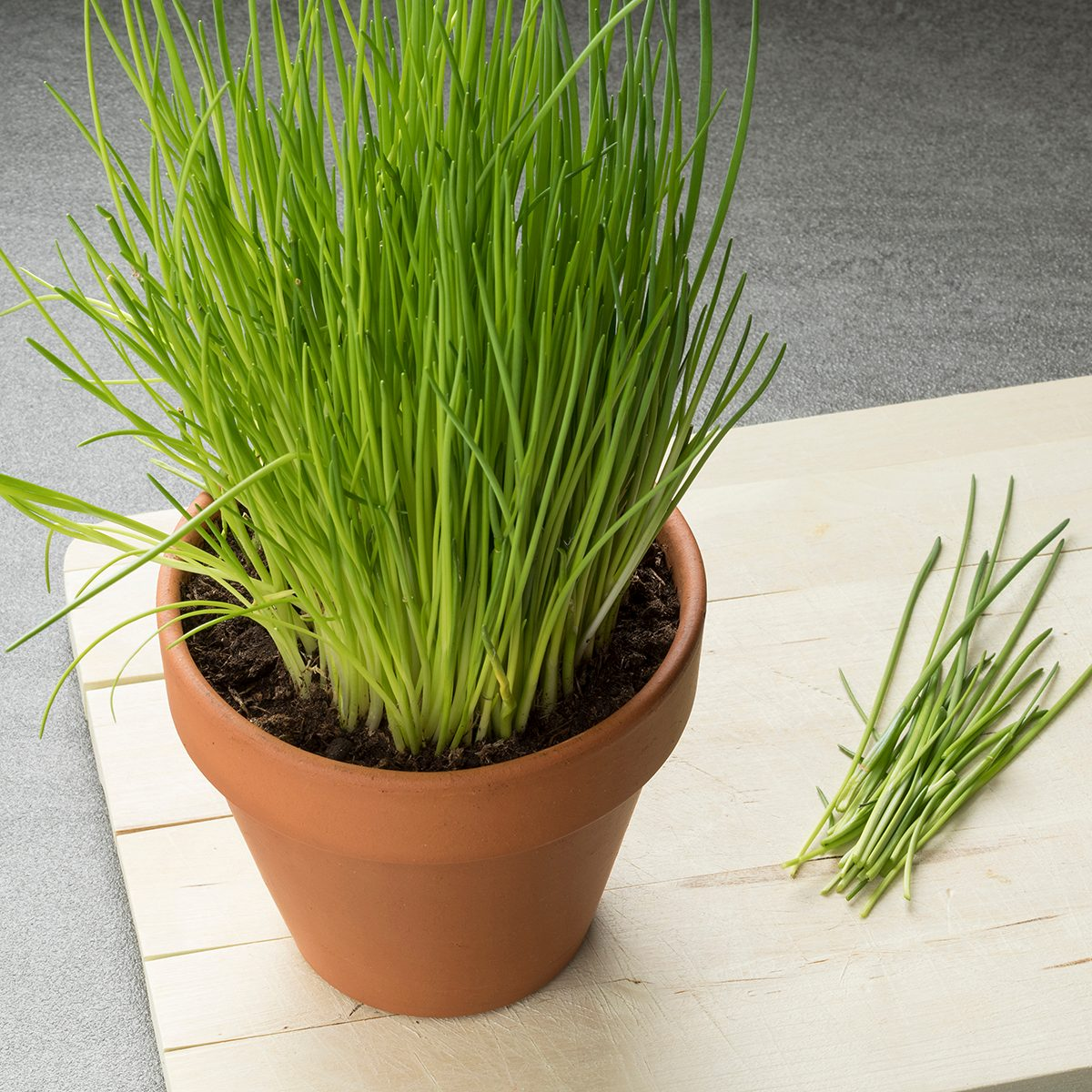 Terracotta pot with fresh cut chives on a cutting board
