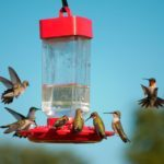 8 Mistakes You're Probably Making With Hummingbird Nectar