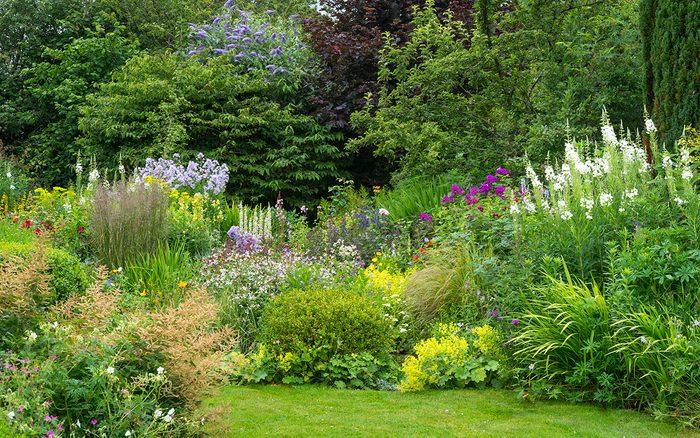 7 Perennial Garden Mistakes To Avoid, How To Plant A Cottage Garden Border