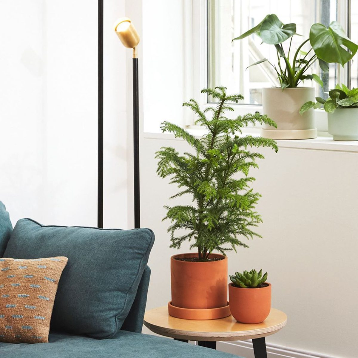 The Sill potted plants