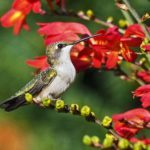 Hummingbird perched on branch by red flowers