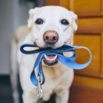 If You Don't Clean Your Dog's Leash, This Will Convince You to Start