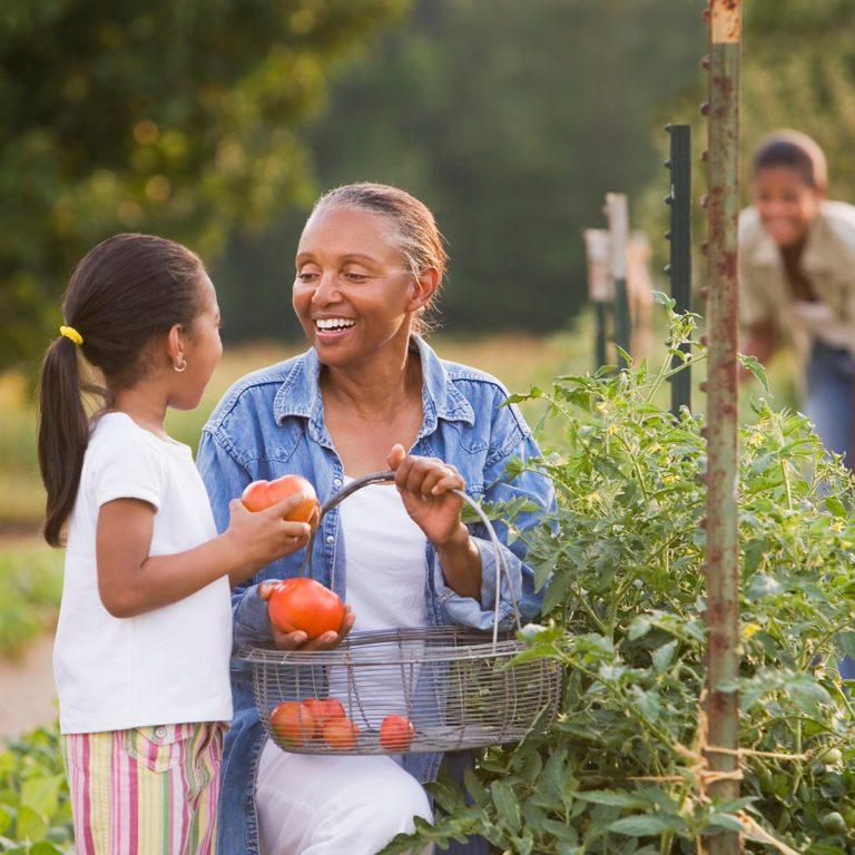 African American grandmother and granddaughter picking tomatoes