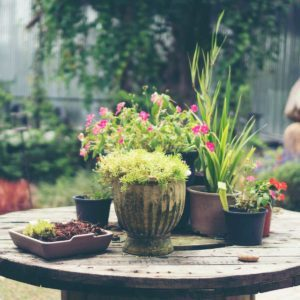 How Heat and Humidity Impact Outdoor Plants