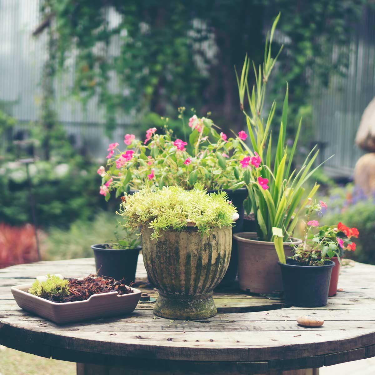Plants in heat