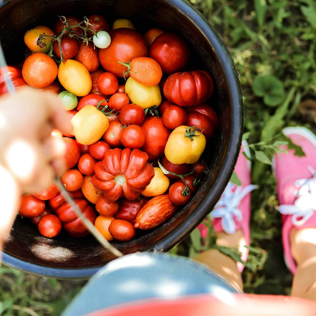 Common Mistakes You're Making with Your Tomato Garden