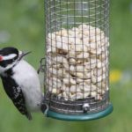 How to Clean a Bird Feeder