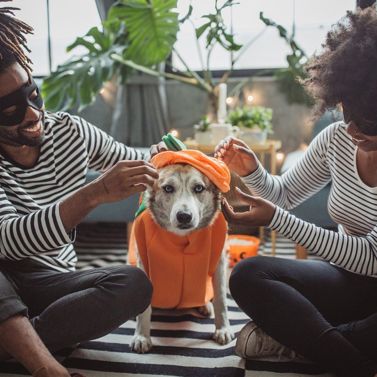 Couple dressing up their dog for Halloween
