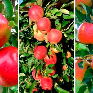 Three BRAND-NEW Apple Varieties Are Coming, So Fall Just Got Even Sweeter