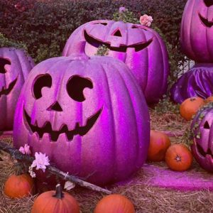 Here's Why People Are Putting Out PURPLE Pumpkins This Halloween