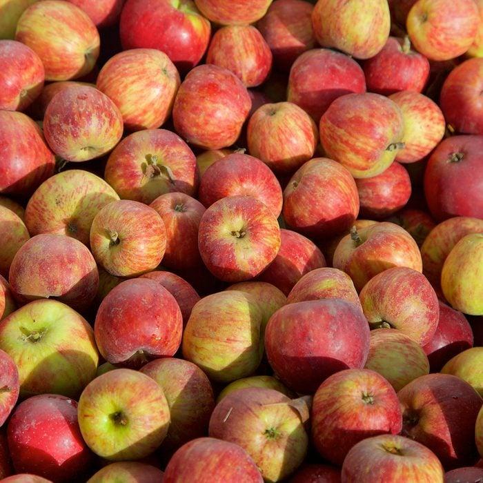 red winesap apples background at apple harvest