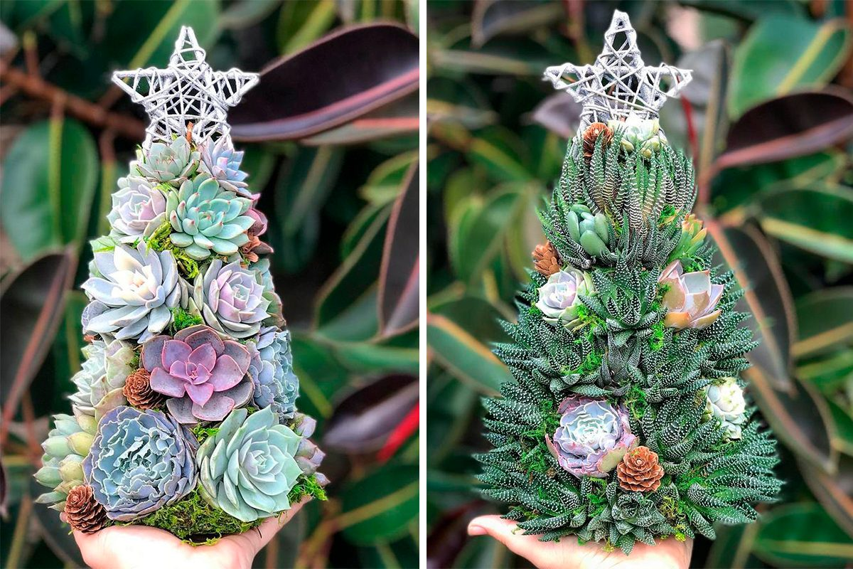 Succulent Christmas Trees Are The Cutest New Christmas Decoration