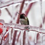 Expert Tips to Attract Hummingbirds in Winter