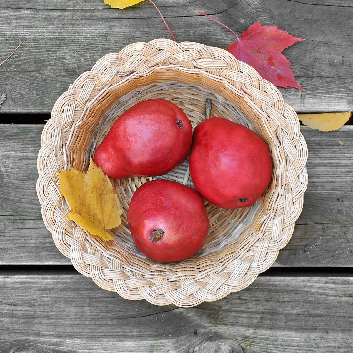 Basket of Red Anjou pears.