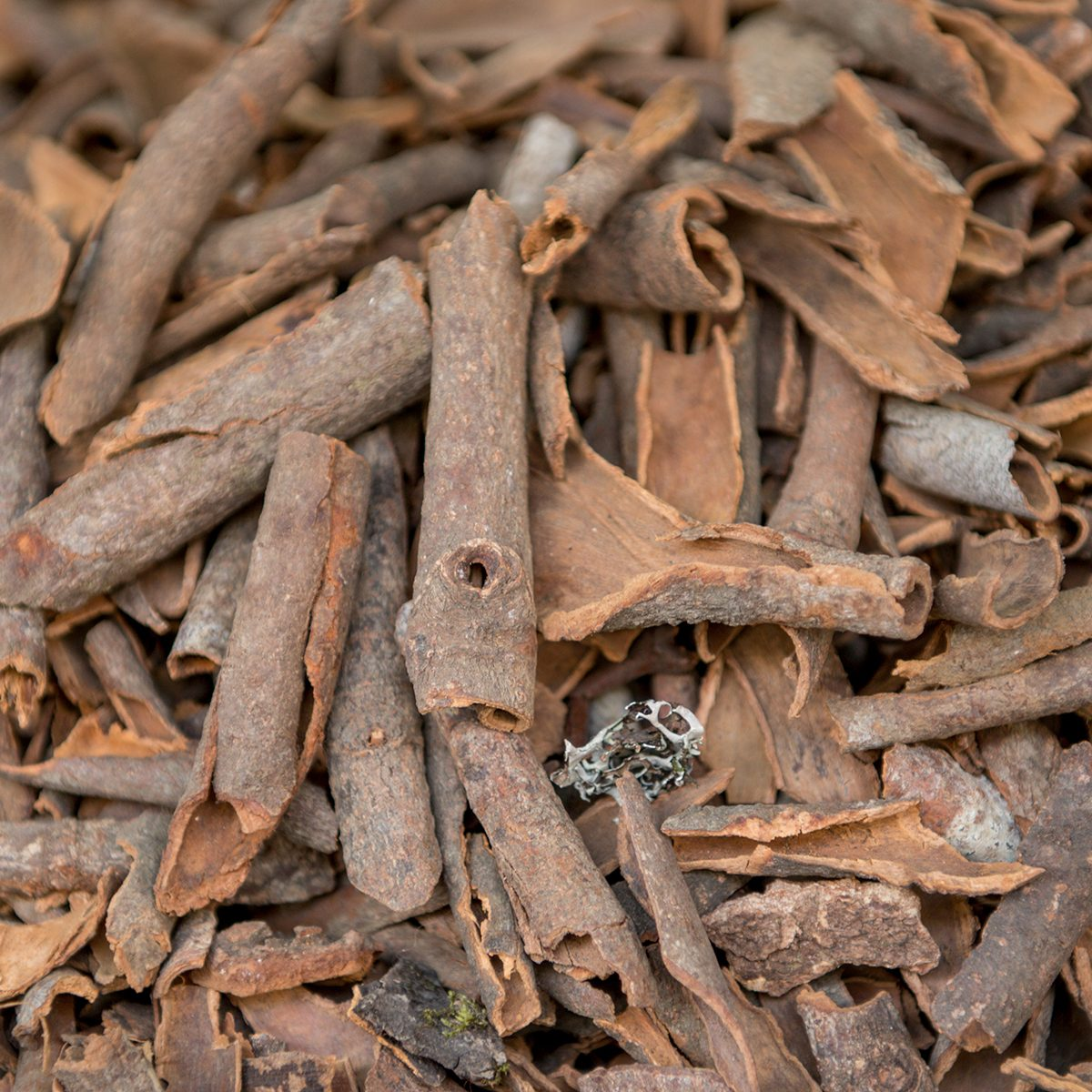 Cassia Bark indian spices
