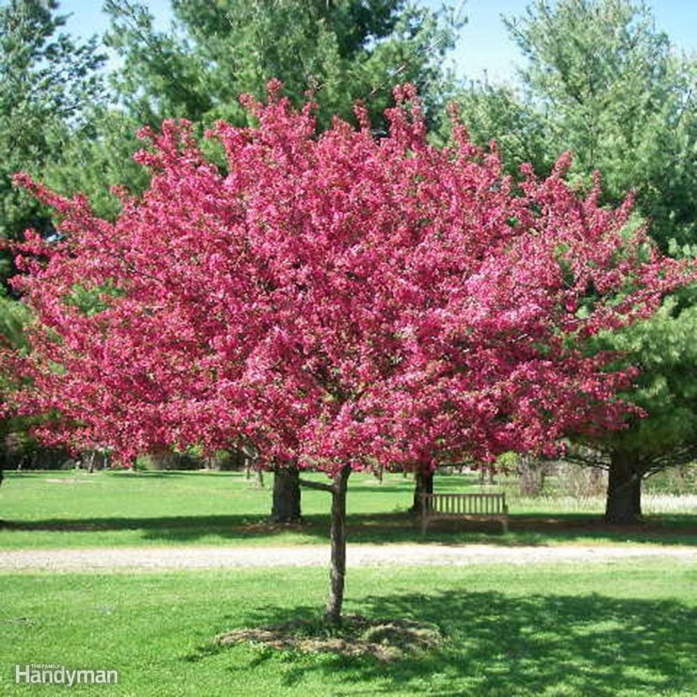 10 Trees to Consider Planting in Your Yard This Spring
