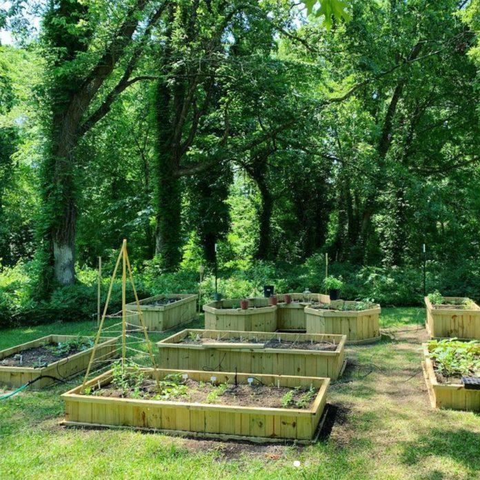 vegetable gardening for beginners The Mocha Gardener Forest Garden Space