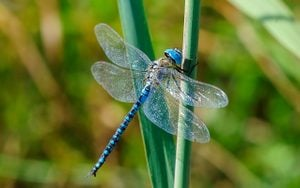 6 Plants That Attract Dragonflies