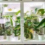 Turn Your Living Space into a Plant Sanctuary with a DIY IKEA Greenhouse Cabinet