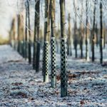 If You See Metal Wrapped Around a Tree, This Is What It Means