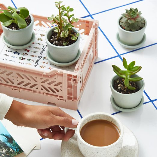 houseplant subscription The Sill Potted Succulent Assortment Gallery All 04 1440x