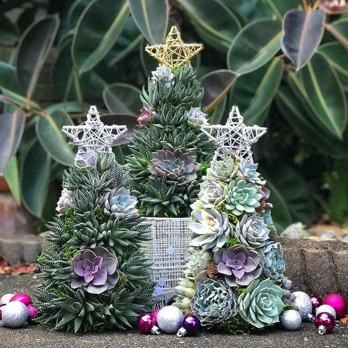 Succulent Christmas Tree Via Terracottacorner