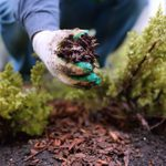 Should You Mulch in the Winter?